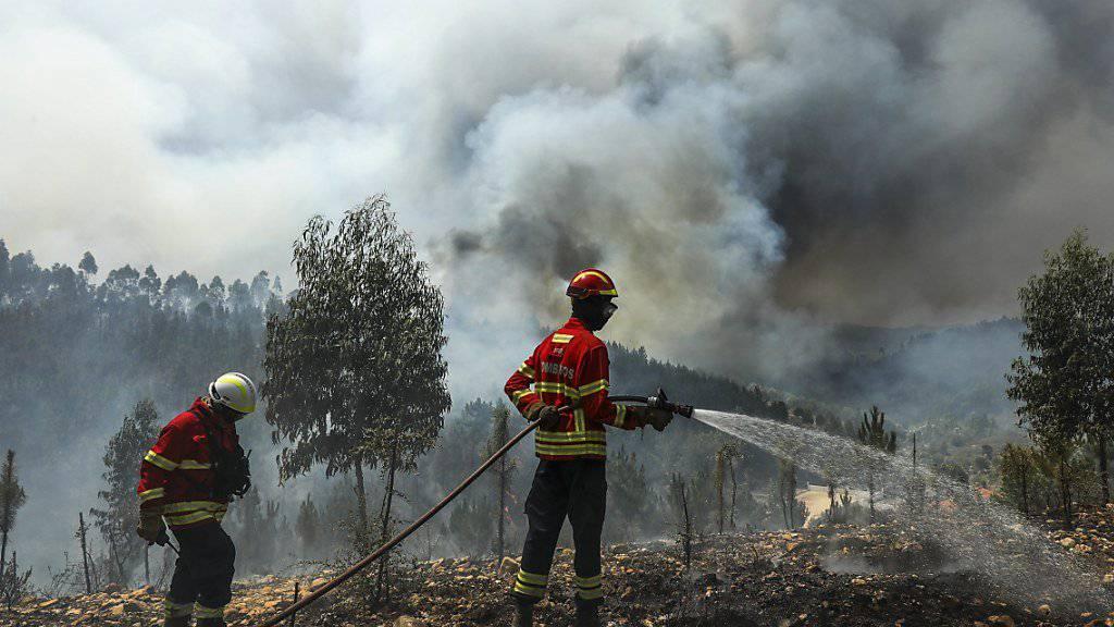 In Portugal wüten erneut schwere Waldbrände. Nach Angaben des Zivilschutzes bekämpften am Donnerstag fast 3000 Feuerwehrleute 80 Brände.
