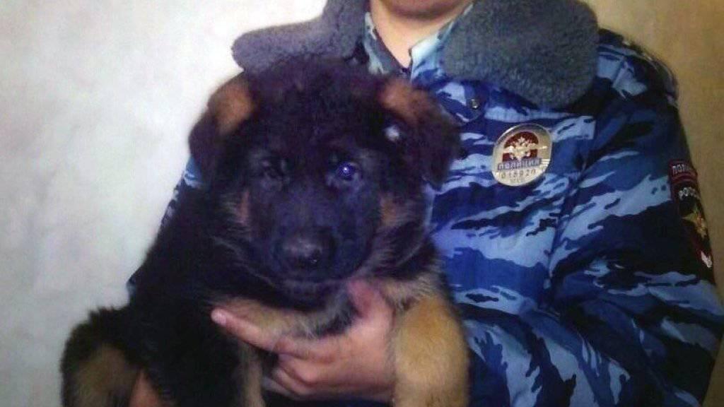 Russland präsentiert den Hundewelpen Dobrinja bereits in Fotos und Videos. (Archivbild)