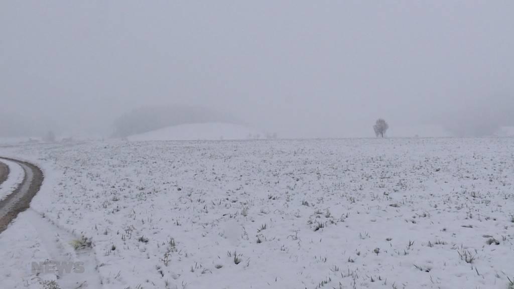 Winter-Comeback: Der Schnee ist zurück