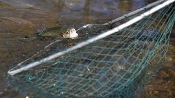 Mit den Fischer-Pachtverträgen sind Rechte und Pflichten verbunden.