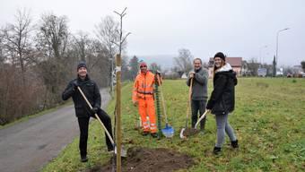 Sie freuen sich über die Nussbäume (von links): Reto Wettstein, Stadtrat; David Brugger, Landwirt; Martin Brügger, Landschaftskommission; Livia Stebler, Projektleiterin Umwelt und Energie.