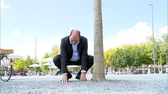Zu stark belastet: Bäume auf Sechseläutenplatz tot