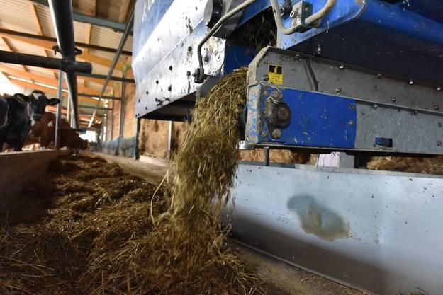 20 Mal täglich verteilt der Fütterungsroboter der ganzen Stalllänge entlang das Futter.