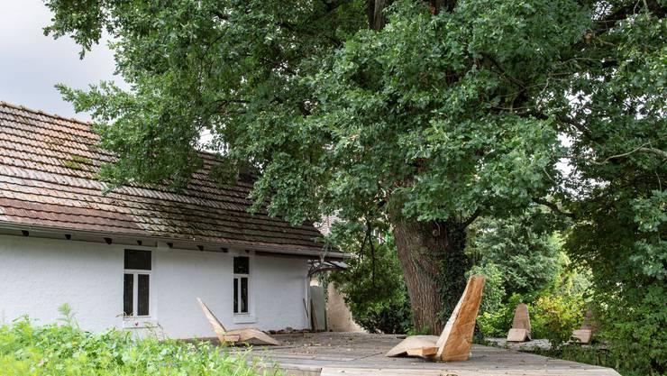 Eichen, Linden und Platanen zählen zu den traditionellen Stadtbäumen. Doch welche Bäume passen zum künftigen Stadtklima?