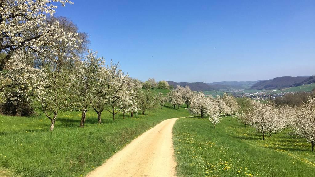 Chriesiweg Gipf-Oberfrick