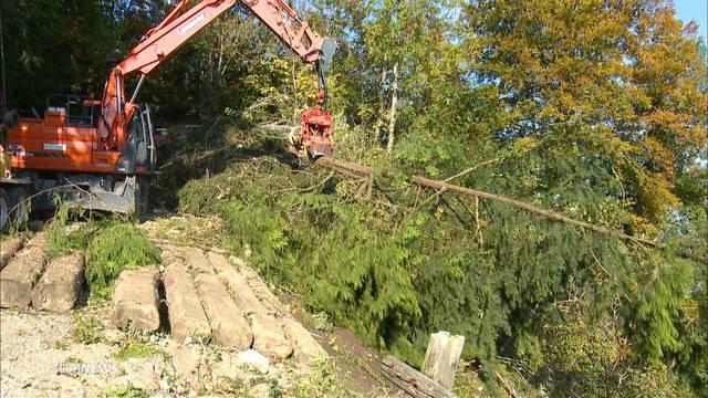 Umstrittene Abholzung von 2100 Bäumen am Uetliberg