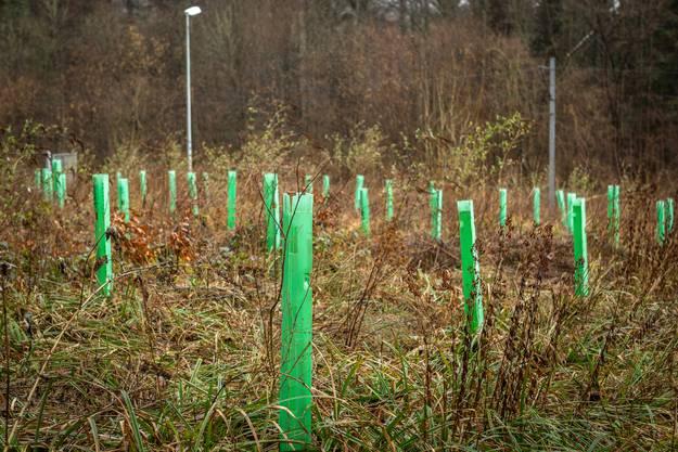 Doch der Wald weiss sich neu zu regenerieren.