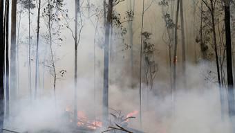 Die Buschfeuer, die seit Monaten in Australien wüten, haben nun auch die Hauptstadt Canberra erreicht. (Archivbild)