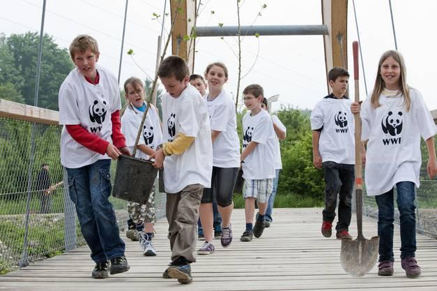 Eine Schulklasse aus Rupperswil bringt Schwarzpappeln über die neue Brücke