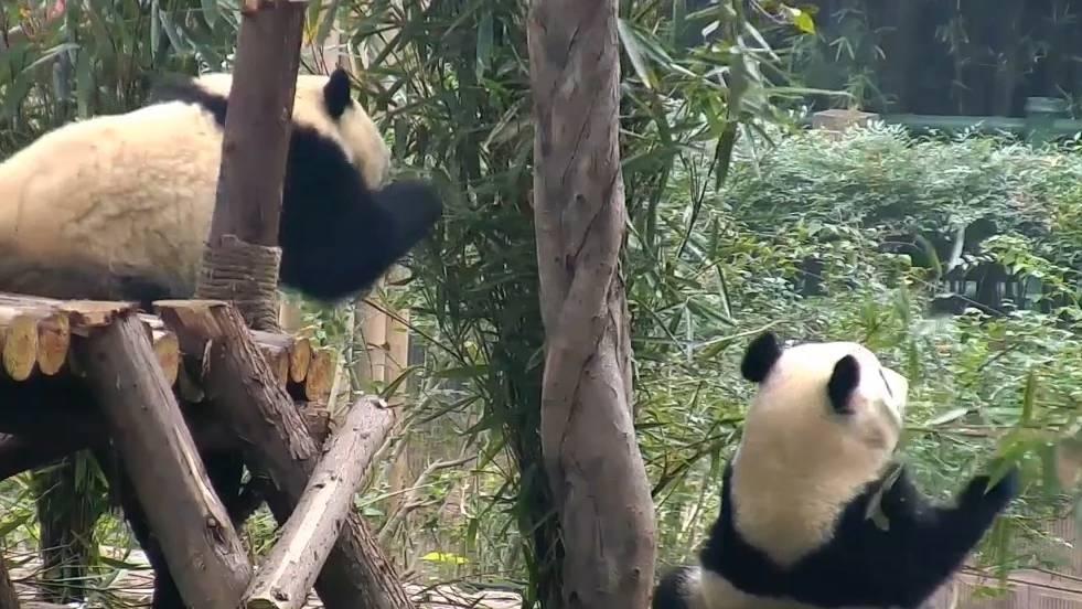 Neulich im Zoo ...