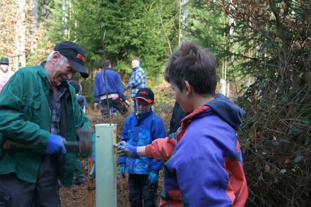Urs Jäggi (links) schlägt einen Holzpfahl ein.
