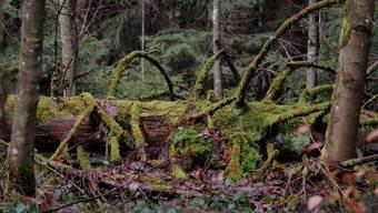 Im Badener Wald werden imer weniger heimische Bäume verarbeitet. (Archivbild)
