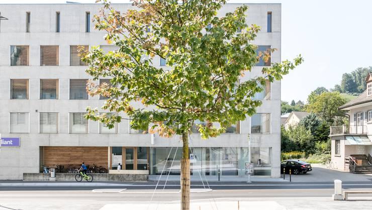 Die Traubeneiche vor dem Gemeindehaus in Suhr wurde im Rahmen der «Aktion Klimaoase» gepflanzt. Das Projekt hat für die Schweiz Pioniercharakter. Bild: Sandra Ardizzone