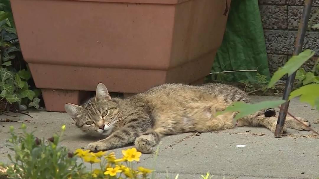 Katzen erschossen und erschlagen – trotzdem kein Tierquäler