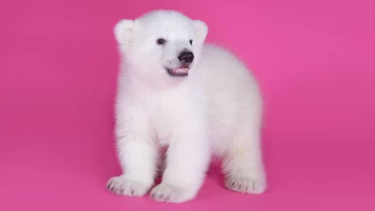 Eisbärenmädchen Luna