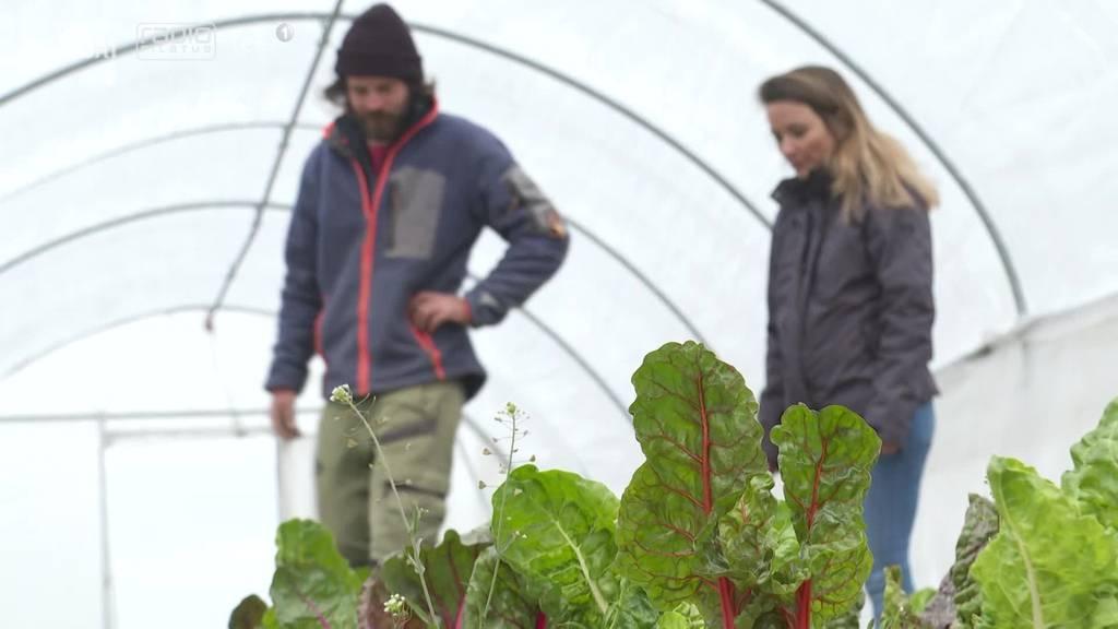 Die «Randebandi» macht Bio-Gemüse erlebbar