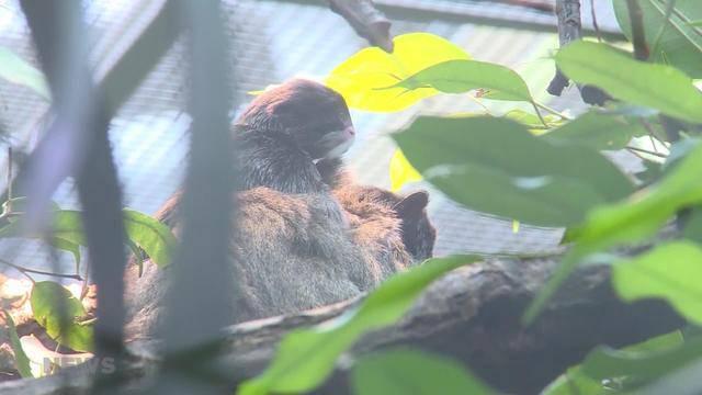 Nachwuchs im Tierpark Dählhölzli