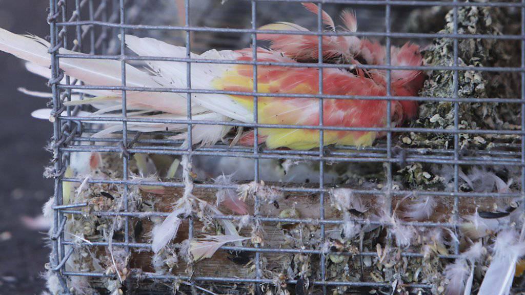 In einer Lagerhalle im kalifornischen Montclair haben die Behörden fast 2000 Tiere im verwahrlosten Zustand entdeckt.