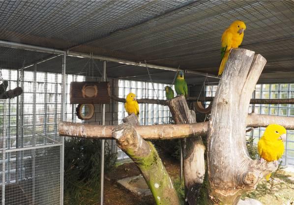Mit solchen Isolationsbausteinen (im Hintergrund) verspricht sich der Vogelliebhaber einen lärmisolierenden Effekt.