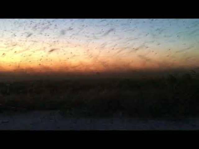 Mückenschwarm in Taganrog