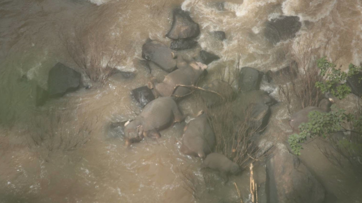 Elefantenherde verendet auf tragische Weise