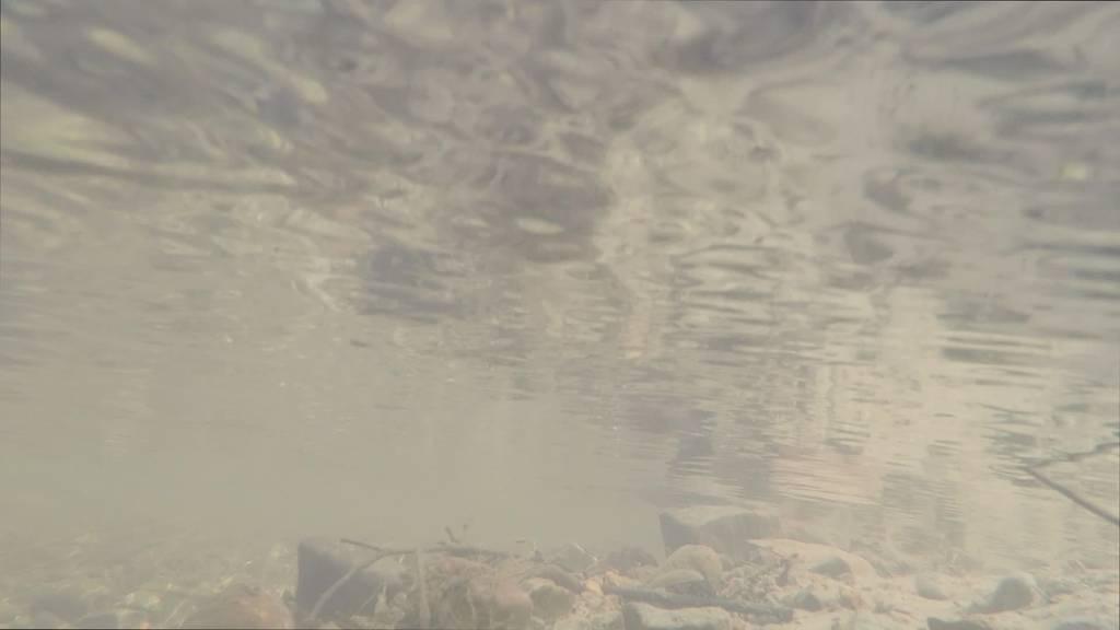 Zu viel Pestizid: So belastet sind St. Galler Bäche