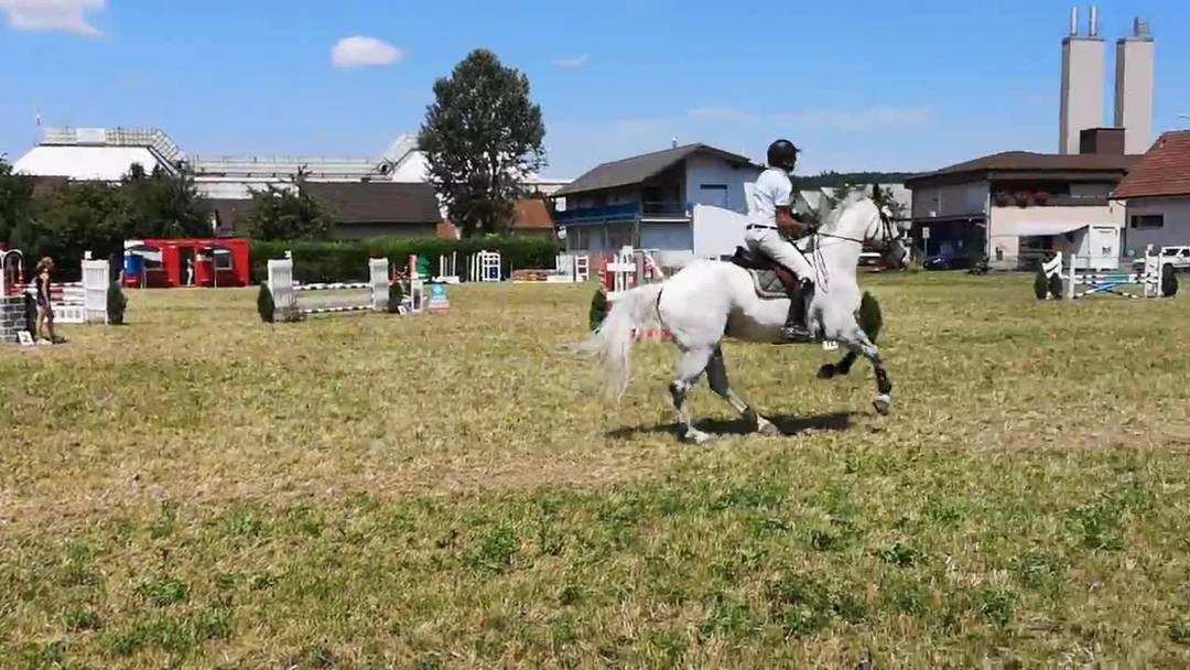 Springkonkurrenz in Wohlen