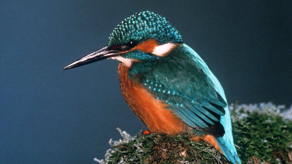 Einige Vögel leiden unter dem harten Winter