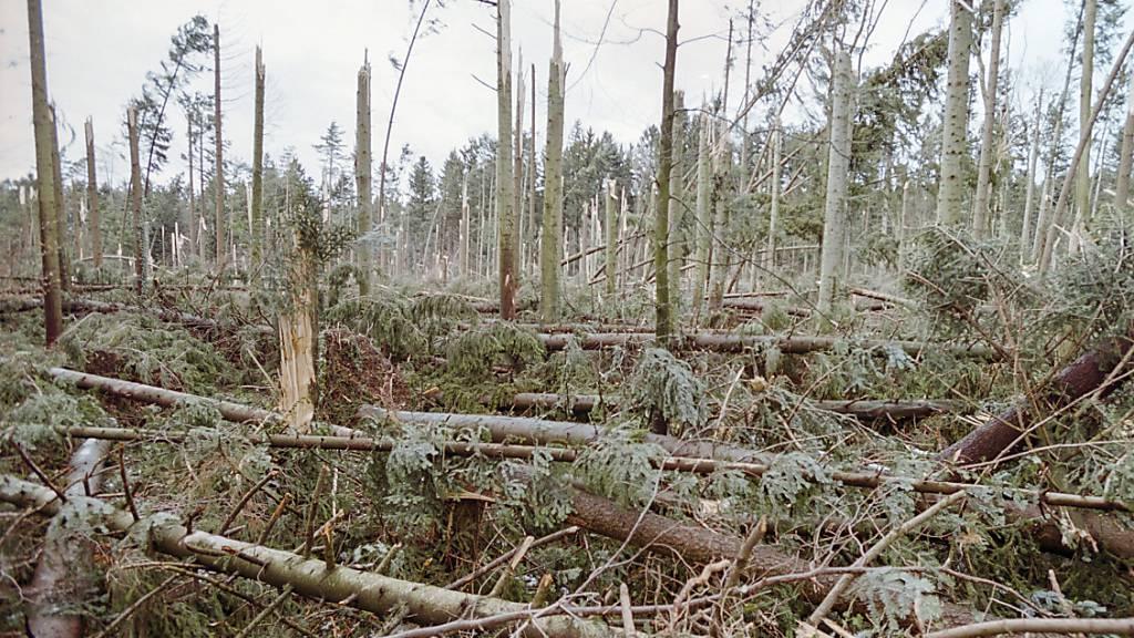 Umgeknickte Bäume, die der orkanartige Sturm Lothar im Jahr 1999 hinterlassen hat: Werden die Bäume nicht weggeräumt, entwickelt sich eine vielfältige Gemeinschaft an Pflanzen und Tieren.