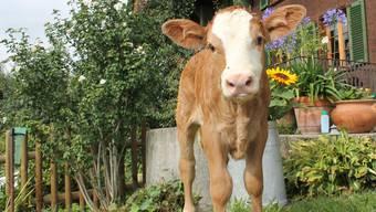 Wer es ernst meint mit dem Tierschutz, kauft tierische Produkte nur aus Schweizer Produktion.