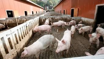 Pro Natura wirft dem Bauernverband vor, Bundesgelder für intensive Landwirtschaft abzuzweigen. Dieser wehrt sich.