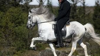Durch ihre zusätzlichen Gangarten wie Tölt (im Bild) und Pass sind Islandpferde besonders geeignet für lange Ritte durch unwegsames Gelände.