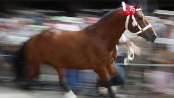 In Saignelégier trafen sich auch dieses Jahr wieder unzählige Pferdefreunde