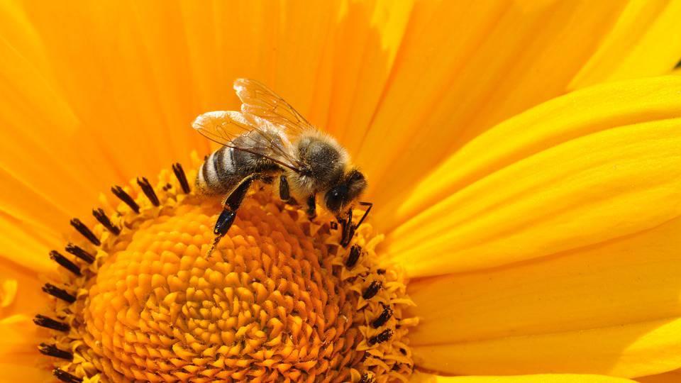 Besorgniserregender Insektenschwund