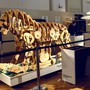 Nach Plänen des Universalgelehrten Leonardo da Vinci: Experten aus Italien haben ein zwei Meter grosses Löwen-Raubtier aus Holz und mit einem Metall-Mechanismus nachgebaut. (Archivbild)
