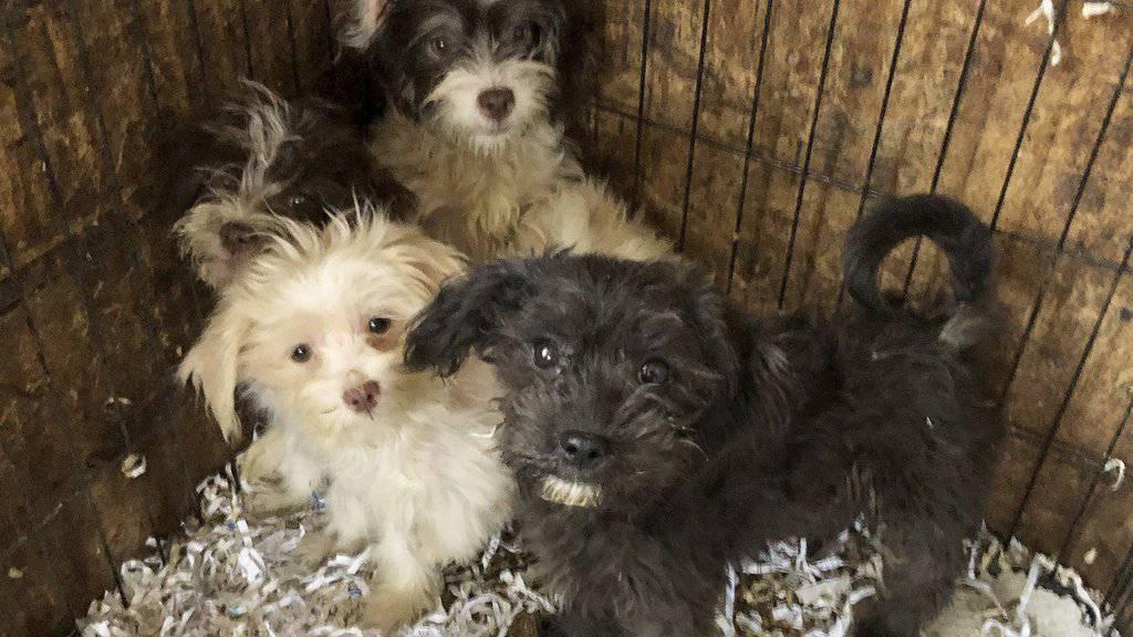 Einige der geretteten Hunde - sie müssen jetzt medizinisch versorgt und aufgepäppelt werden.