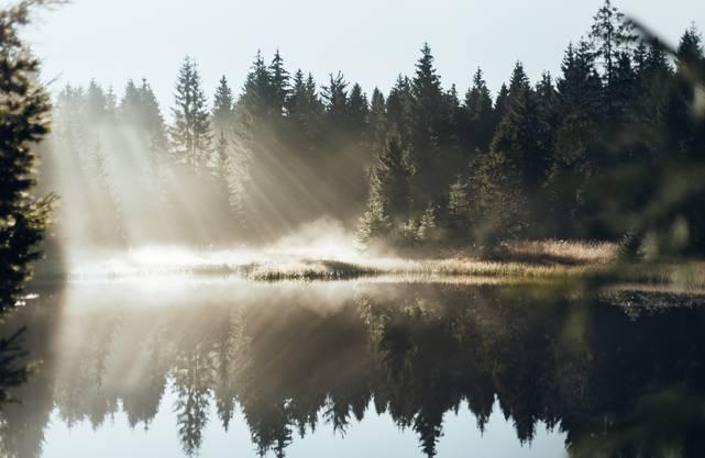 Rund um Clausthal-Zellerfeld liegen etwa 50 Teiche. Bei Morgennebel sind sie besonders schön anzuschauen.