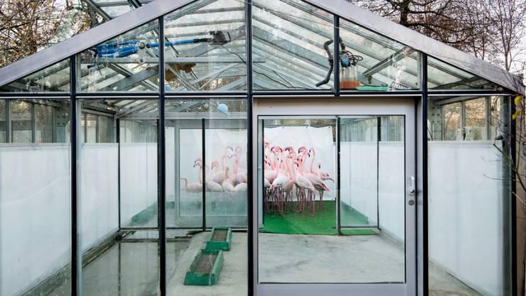 Für dieses Bild von notgedrungen zusammengepferchten Flamingos im Berner Tierpark Dälhölzli wird Anthony Anex mit dem diesjährigen Swiss Press Photo-Preis in der Kategorie Aktualität ausgezeichnet.