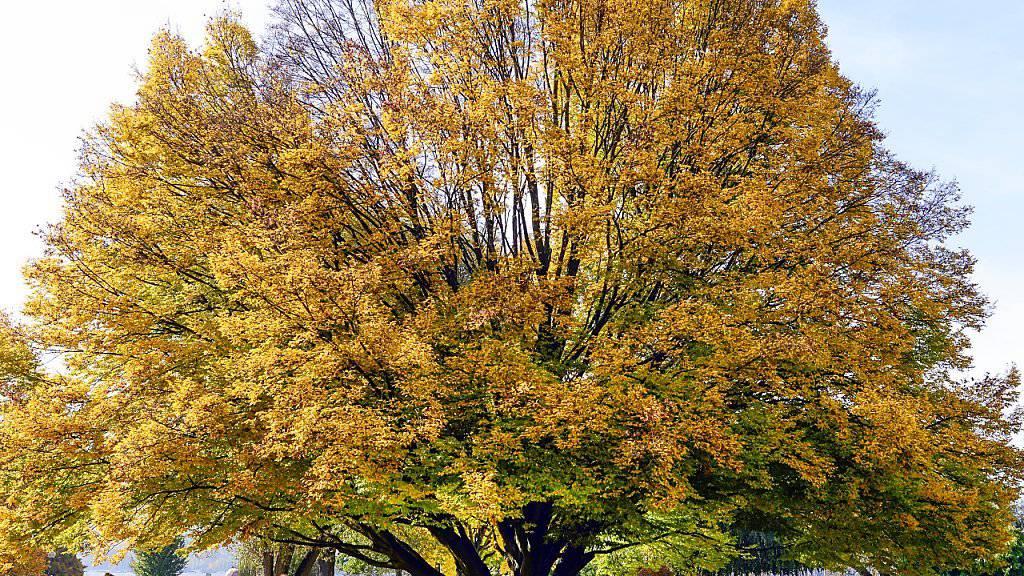 Sonne pur: Der goldene Herbst geht weiter - auch am Wochenende.