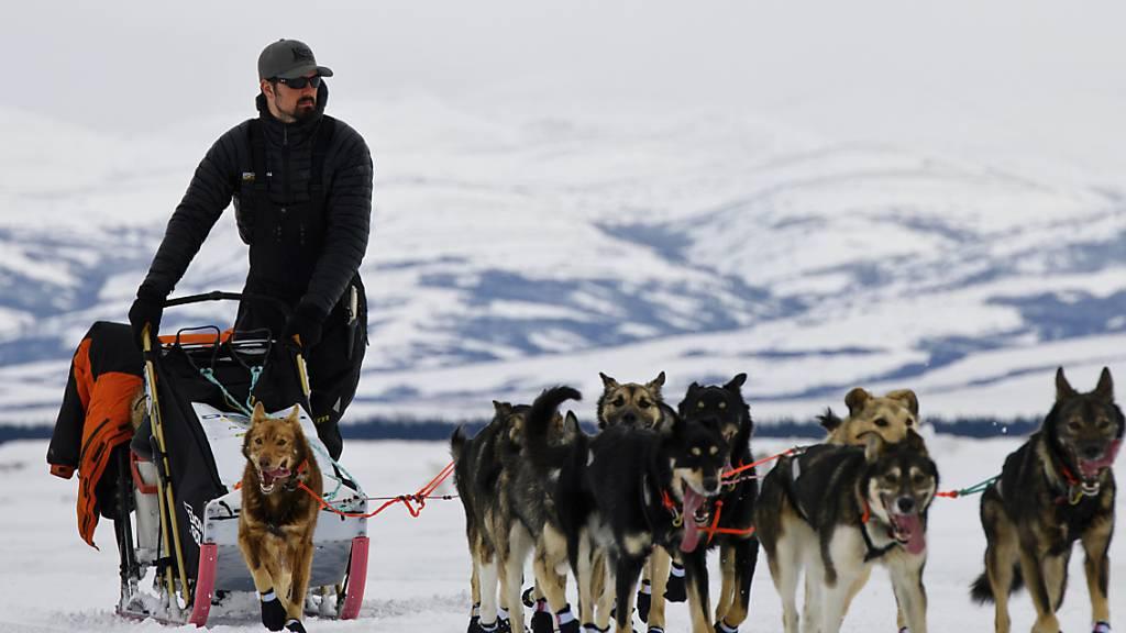 ARCHIV - Peter Kaiser, US-amerikanischer Schlittenhundeführer, und seine Hunde nehmen am Iditarod, dem längsten Hundeschlittenrennen der Welt, teil. Foto: Marc Lester/Anchorage Daily News/AP/dpa