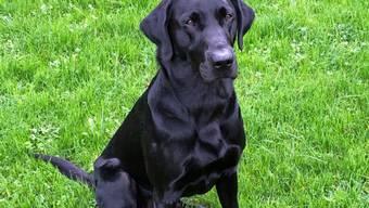 Diensthund Dusty spürte mehrere hundert Gramm Betäubungsmittel auf.
