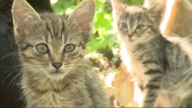 """""""Für mich sind die Katzen heilig"""""""