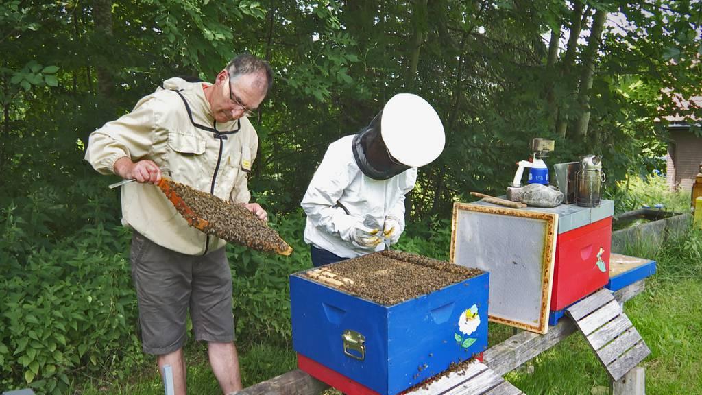 Ausserrhoder Bienen machen Ferien in Arosa