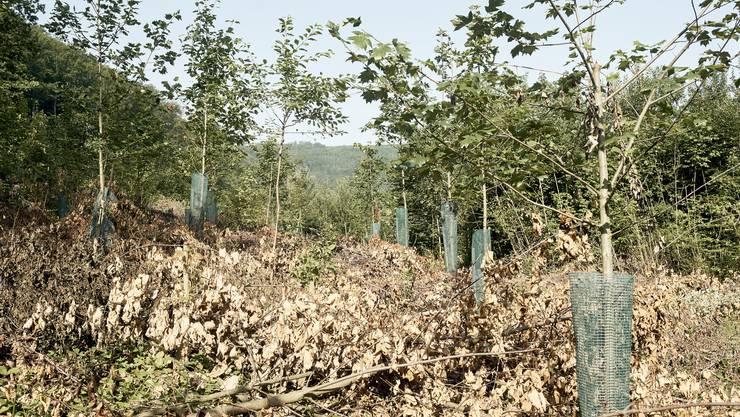 Der trockene Sommer sorgte für Waldschäden. (Symbolbild)
