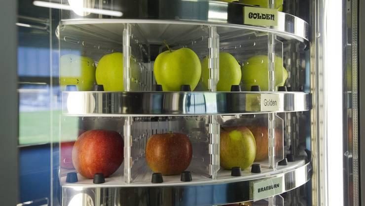 Der Apfel muss nicht immer makellos sein, um zu schmecken.