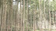 Wald in der Krise
