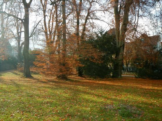 Nochmals den schönen Herbst geniessen ... im Kurpark Baden