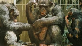 Die Basler Regierung muss nochmals über die Bücher – beim Zolli jedenfalls will die vorberatende Grossratskommission nicht sparen. Zoo Basel