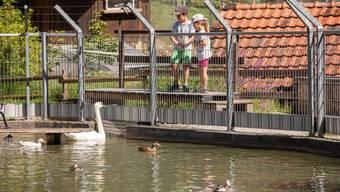 Seit über 40 Jahren können Kinder im Tierpark Schwäne beobachten und Geissen streicheln.
