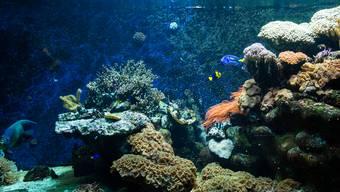 In Basel wächst ein Korallenriff